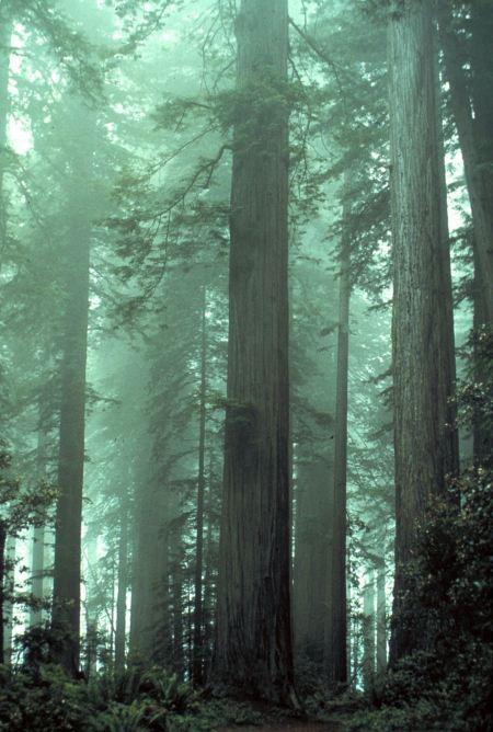 Free Fog shrouded Lady Bird Johnson Grove.