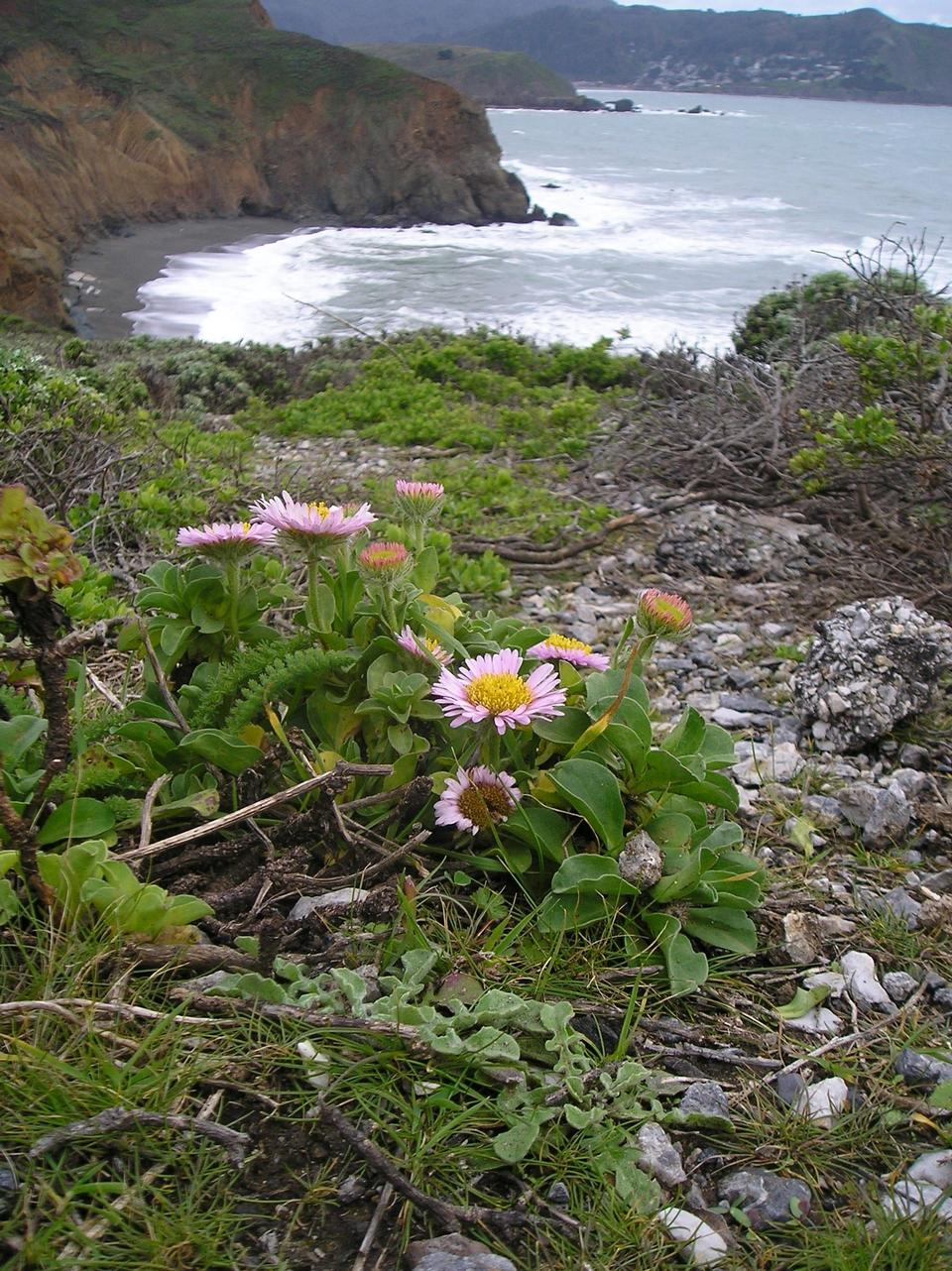 Free Mori Point wildlfowers