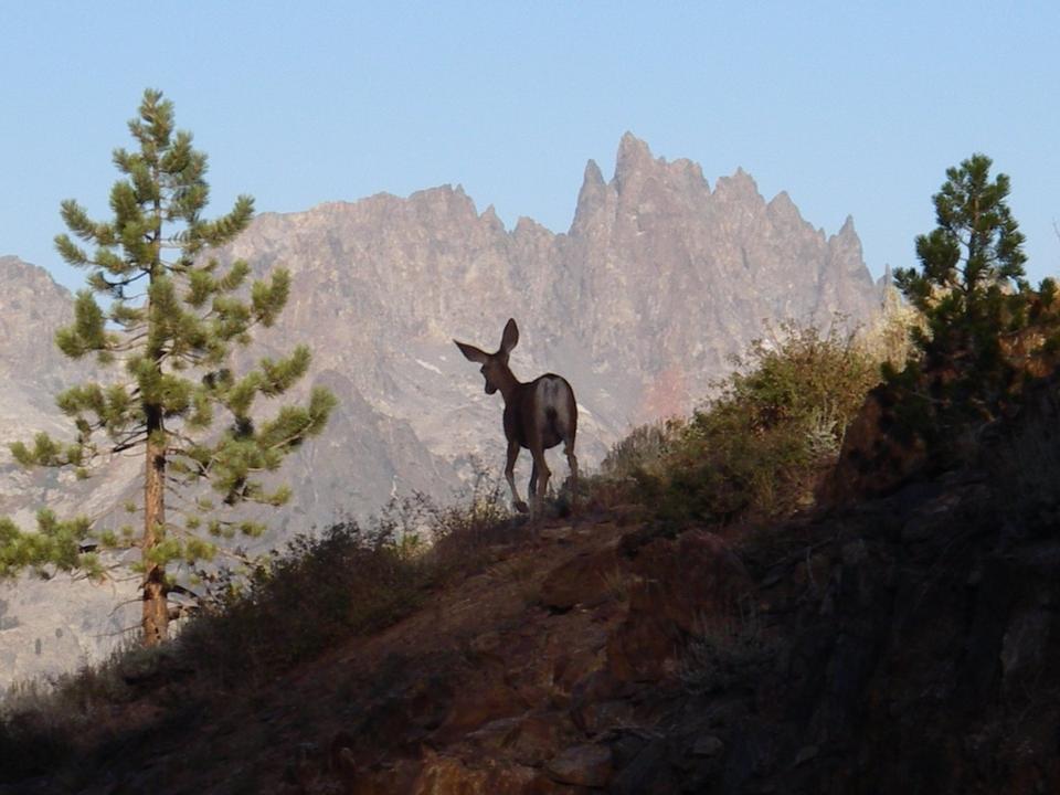 Free Mule Deer and the Minarets