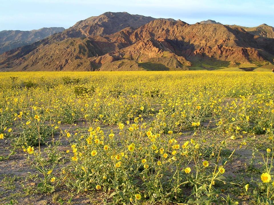 Free Springtime Death Valley National Park