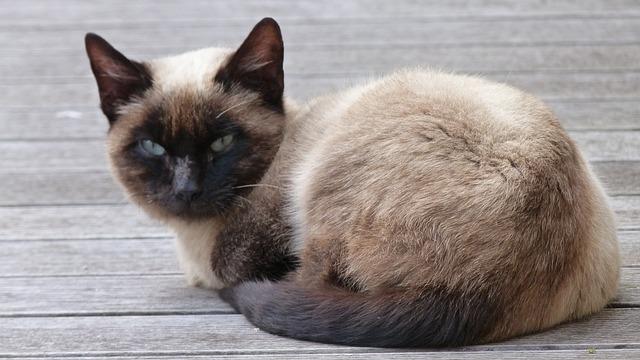 Free cat curious animal young animal close mammal