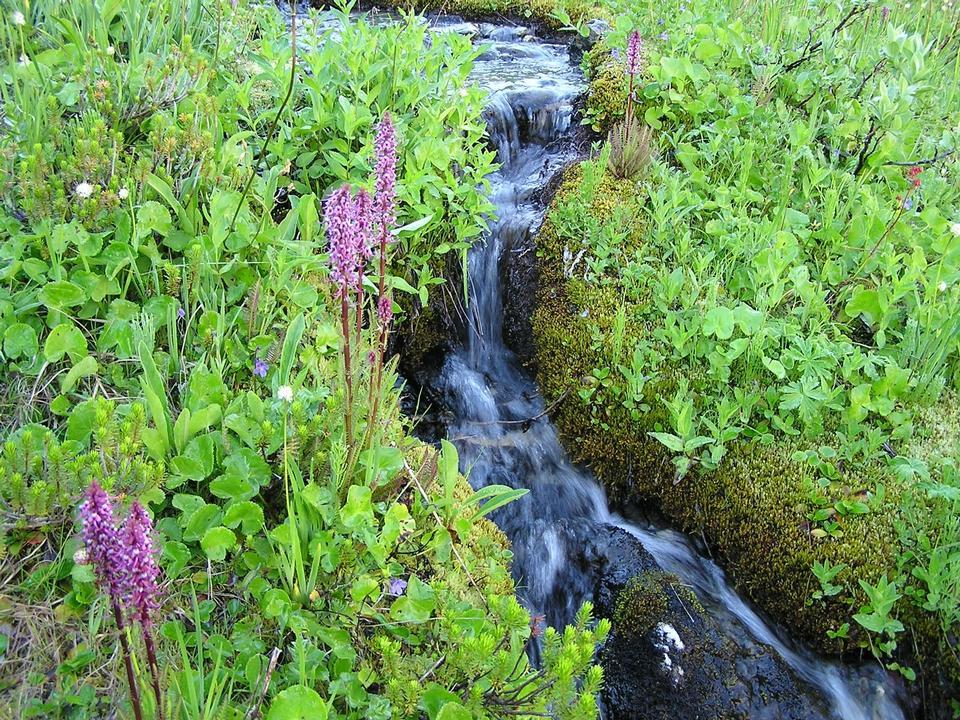 Free Wildflowers along a brook
