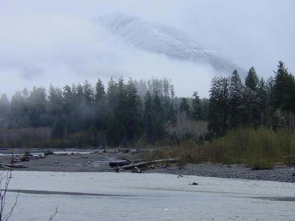 Free Hoh River at Olympic National Park