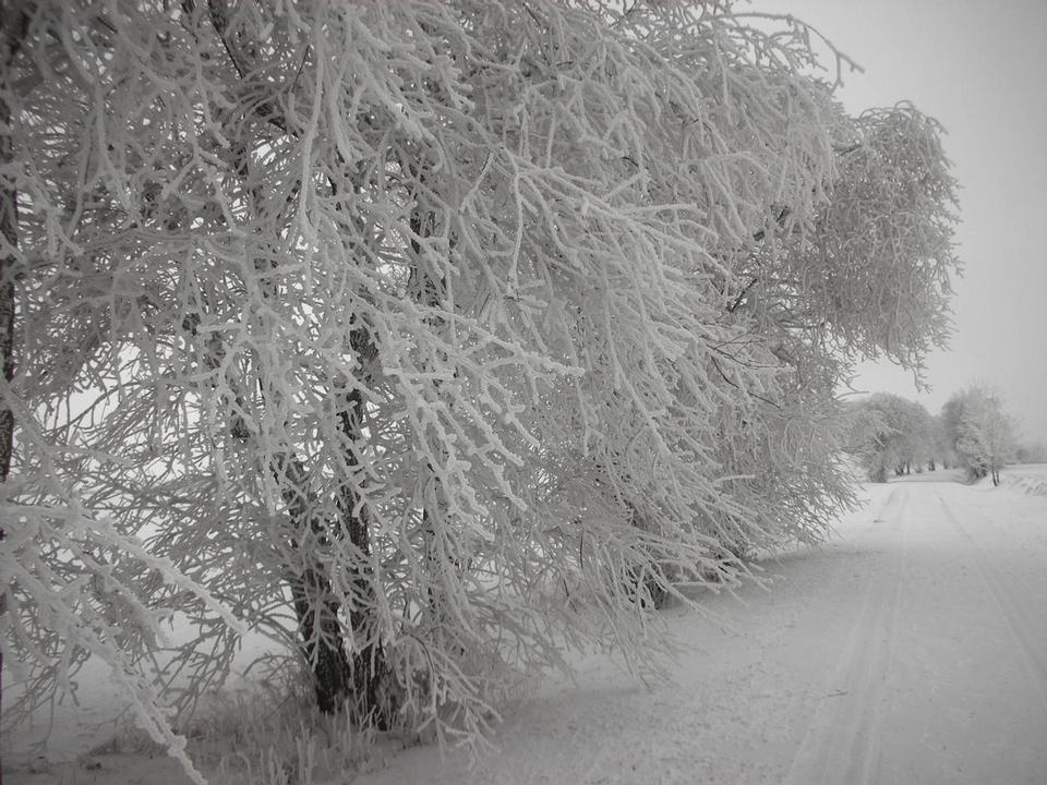 Free road and hoar-frost on trees in winter