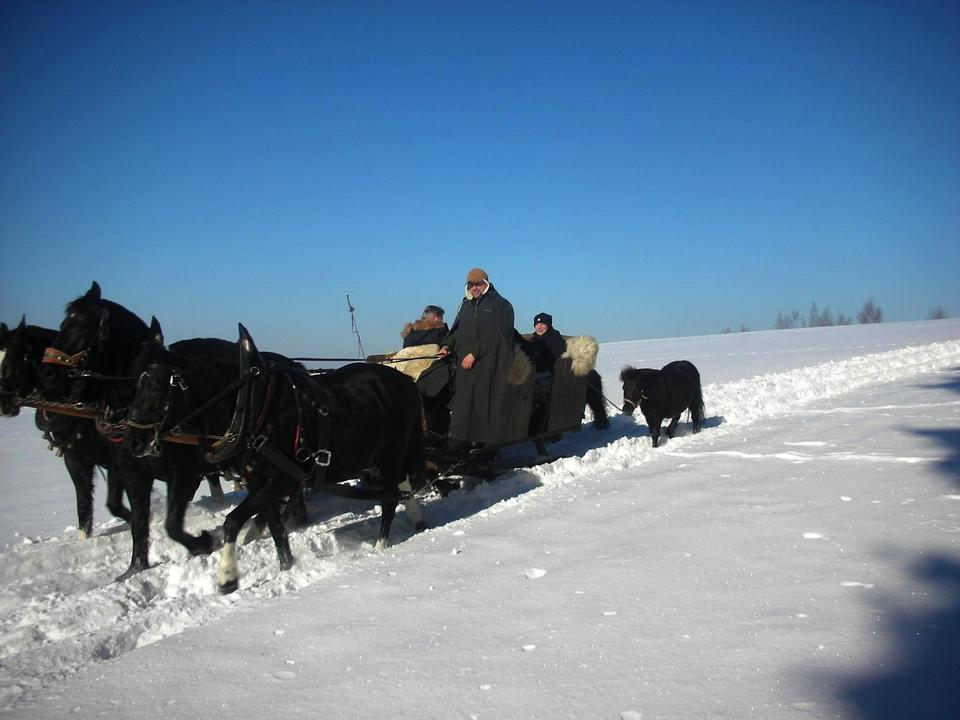 Free New Year's landscape with a horse sledge