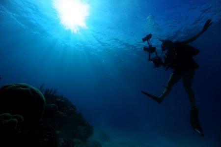 Free Scuba Diver descendsinot underwater