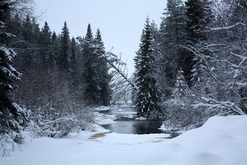 Free morning in a forest with snow in winter