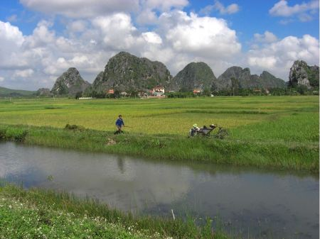 Free Rice field and river, NinhBinh, vietnam landscapes