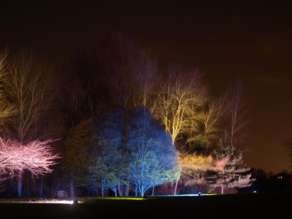 Free green forest with lights and dark trees
