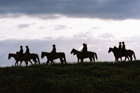 Free Silhouette cowboys with horses in the sunset