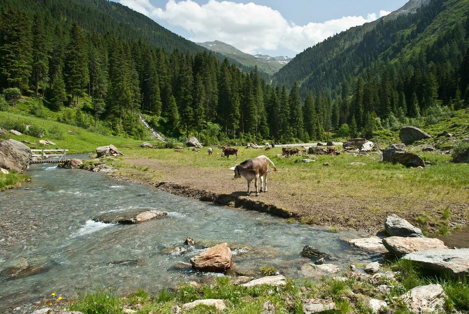 Free Mountain stream in Austria