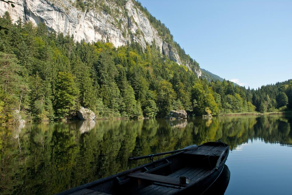 Free Reflection of Lake