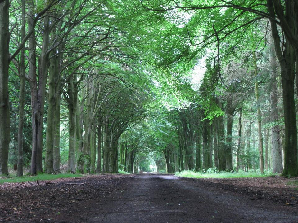 Free Country road running through tree alley