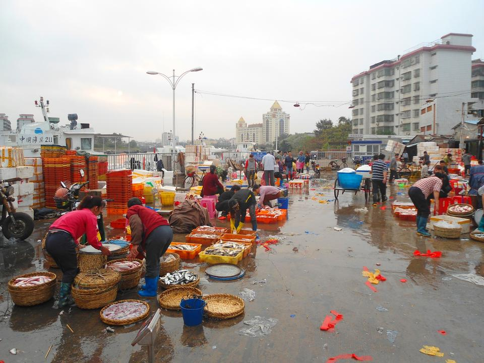 Free wholesale fish market at Haikou New Port