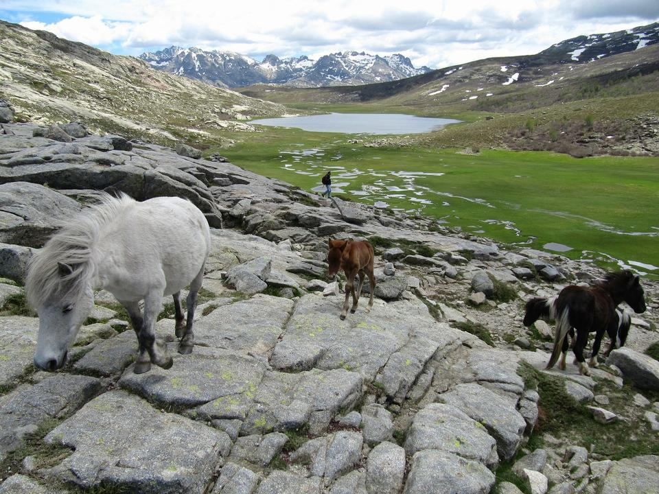 Free herd of horses is grazed against mountains