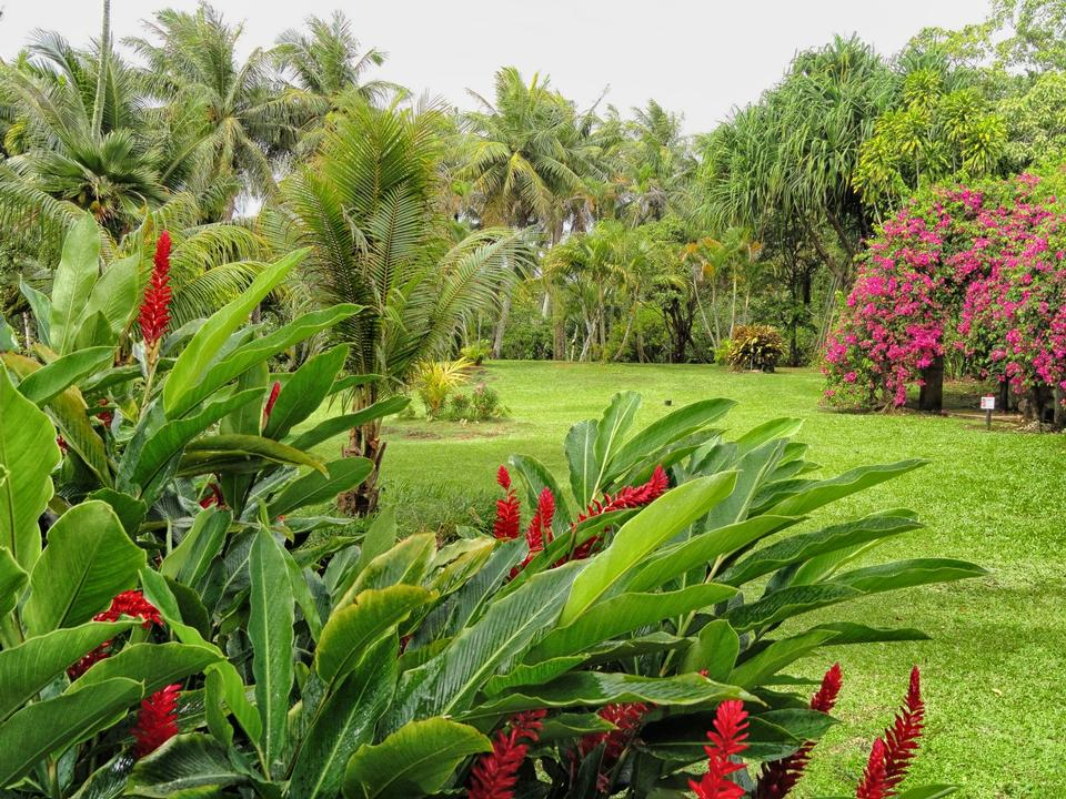 Free tropical garden amidst lush greenery