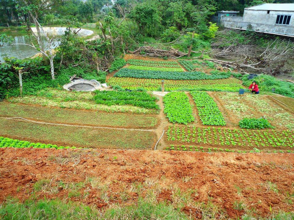 Free A small vegetable farm in rural Hainan Province, China