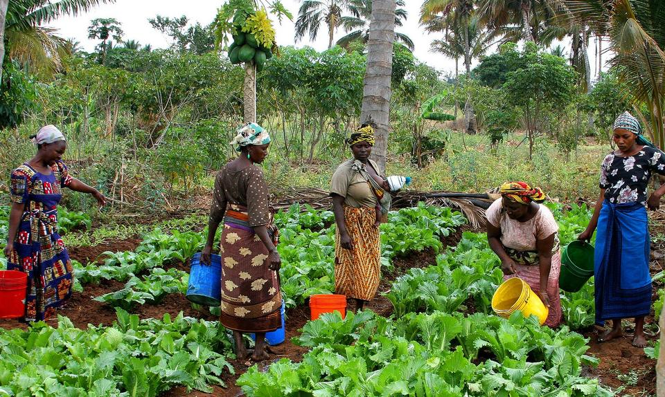 Free Women Working Farm Tanzania