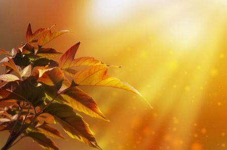 Free Rainbow rays, yellow maple leaf
