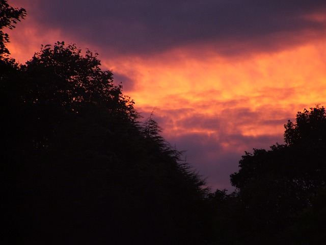 Free sunset dark trees sky skies orange clouds dusk