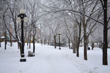 Free Winter park covered with snow with a row of lamps