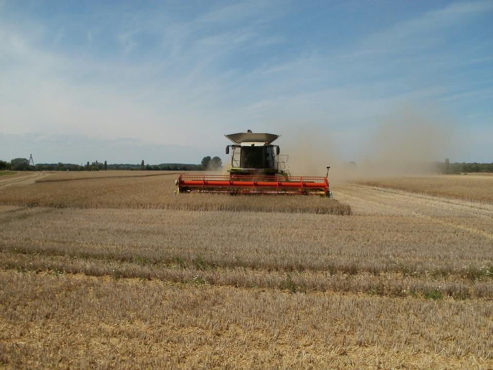 Free Machine harvesting the corn field