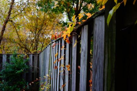 Free Autumn tree with a wooden fence