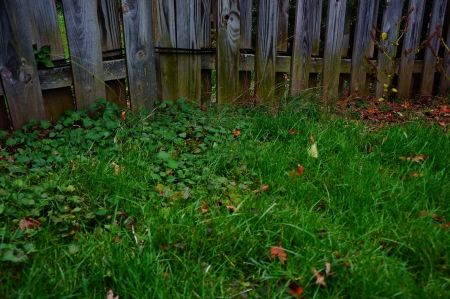 Free Autumn grass