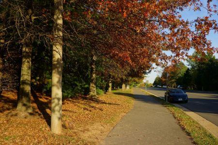 Free autumn walkway