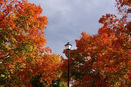Free Street light in front of trees with a colorful fall foliage