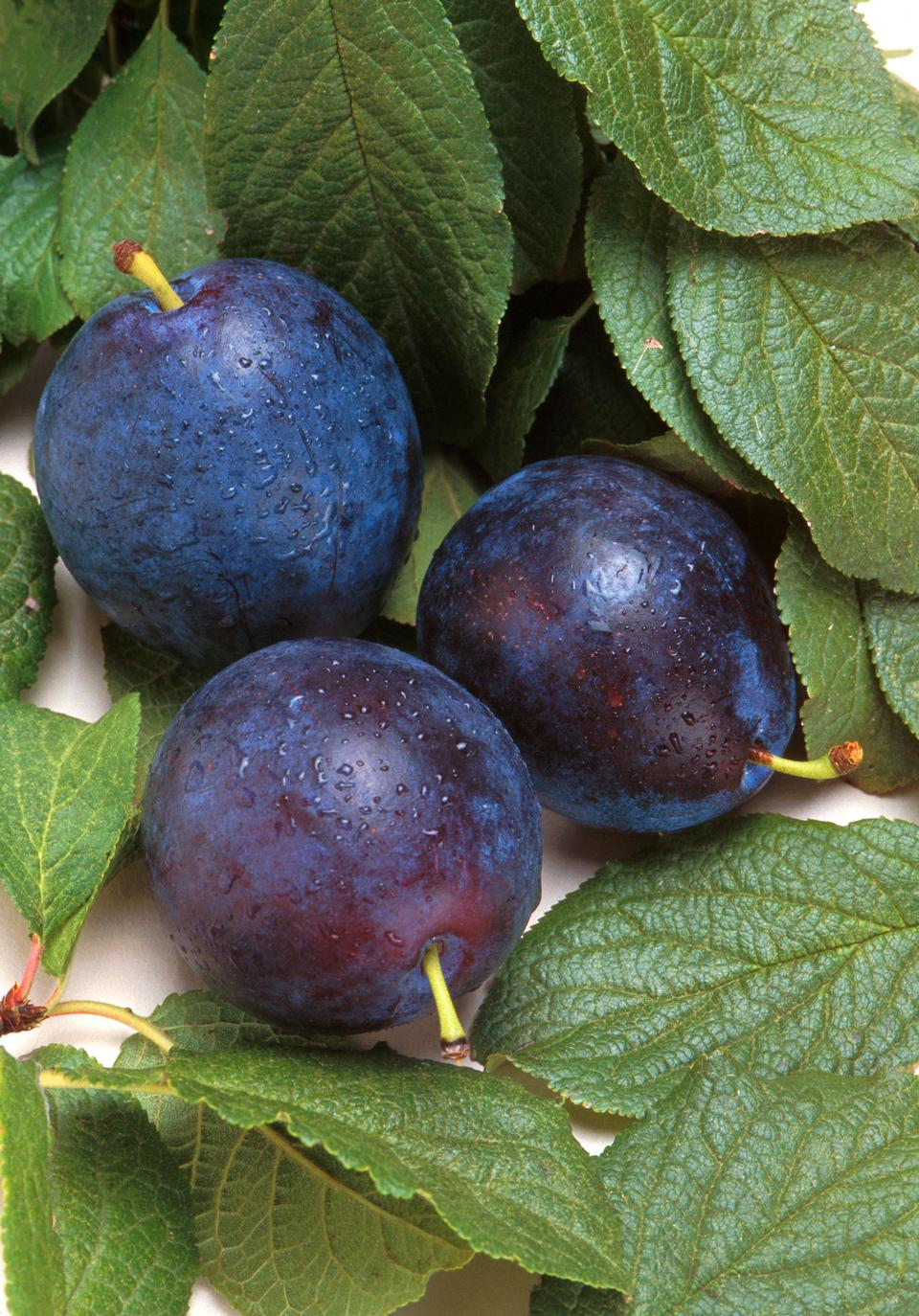 Free Bluebyrd Plums And Leaves