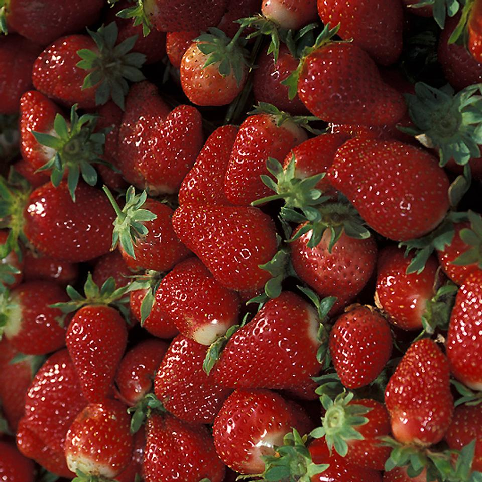 Free A Bunch Of Red Chandler Strawberries