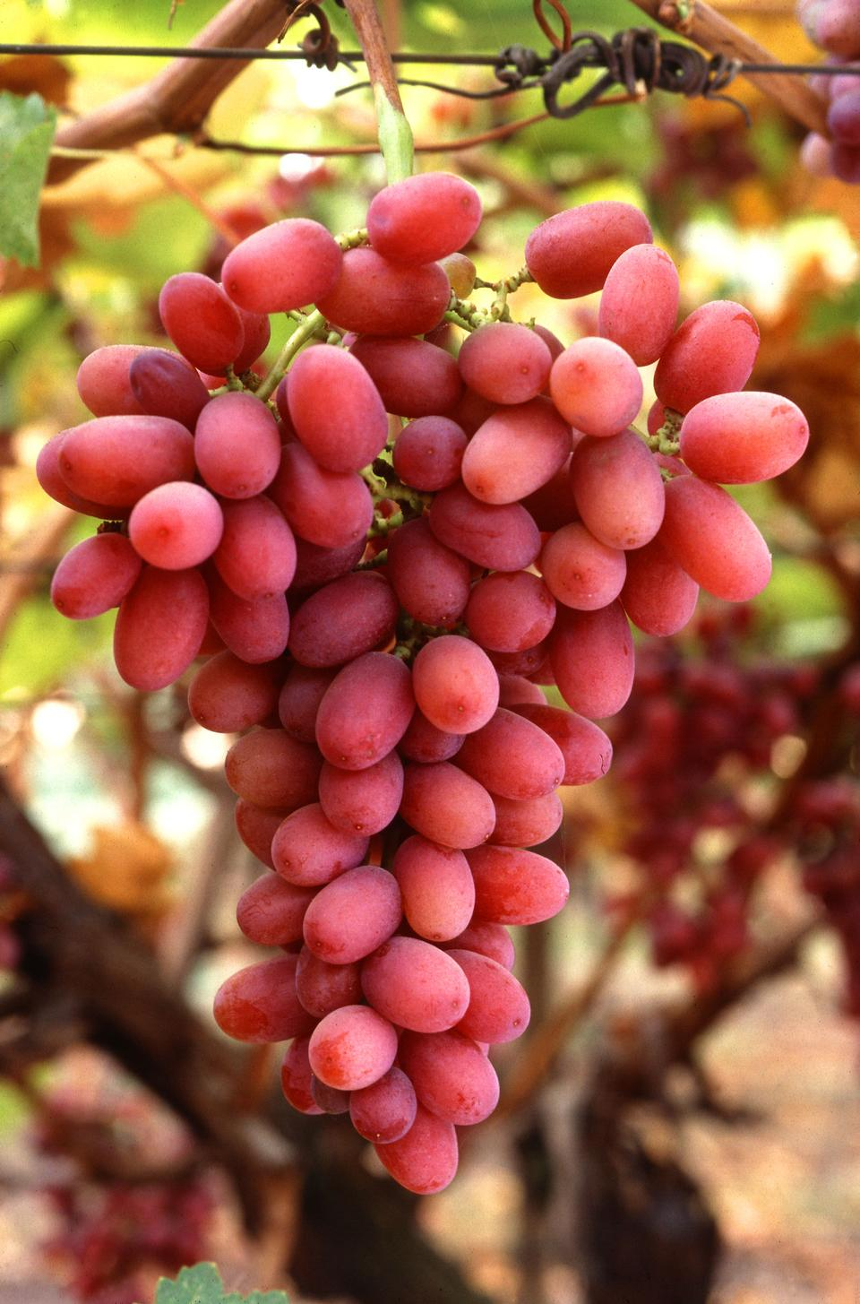 Free A Bunch Of Red Crimson Seedless Grapes