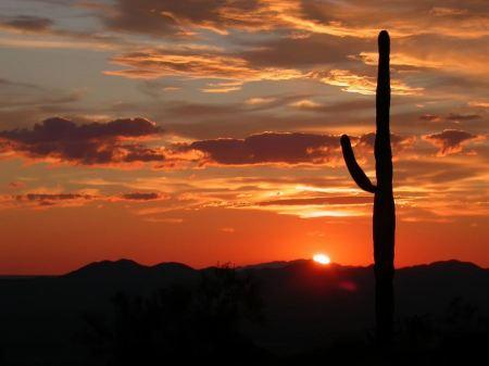 Free Saguaro silhouette in fiery Sonoran Desert sunset lit sky
