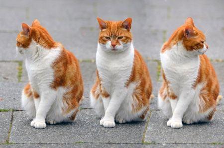 Free three cute red kitten
