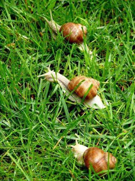 Free Interested snail sitting in the grass on wet leaf