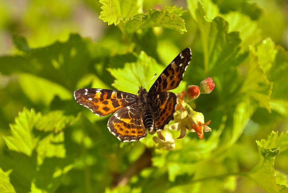 Free Beautiful butterfly wings. Green background.