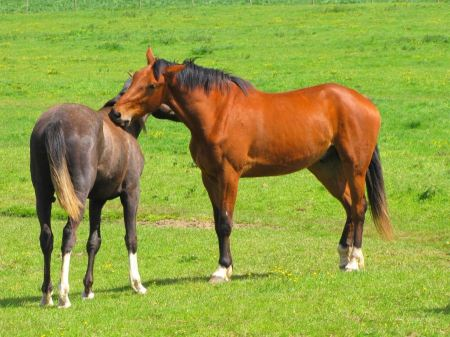 Free Horses on a summer pasture