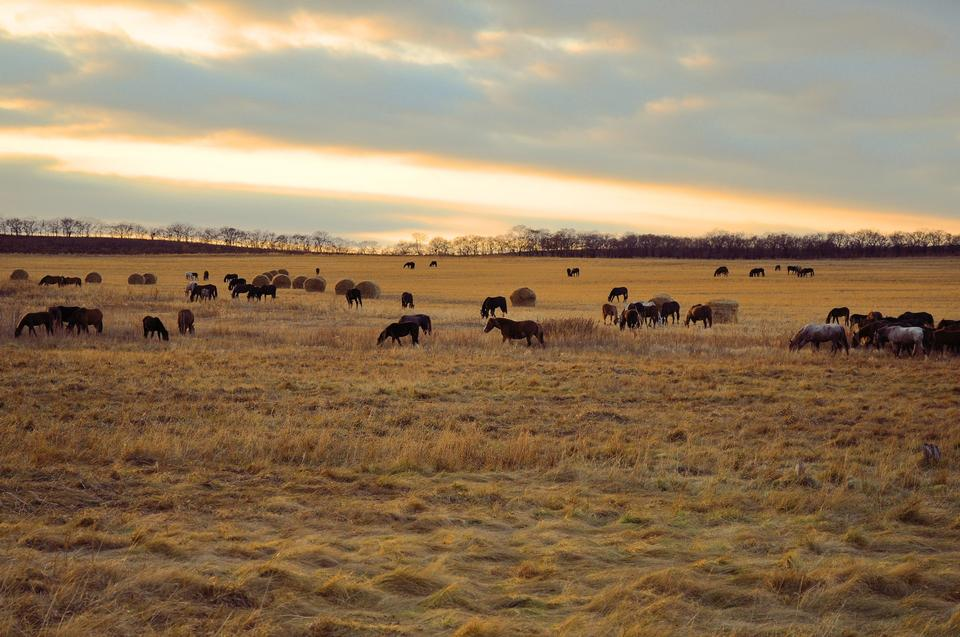 Free Horse herd in a field