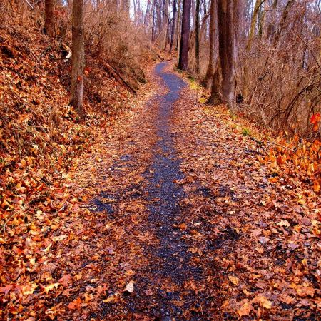 Free Path through the autumnal forest