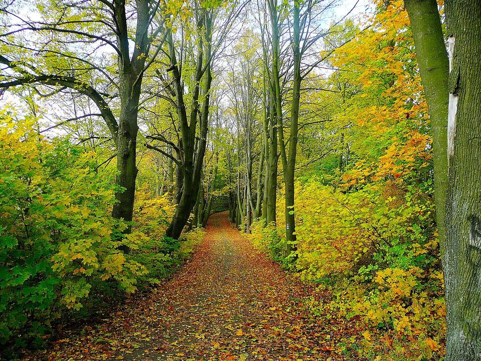 Free Autumn Pathway