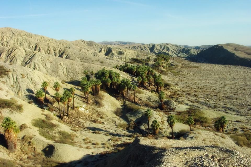 Free Landscape Coachella Valley Palms California