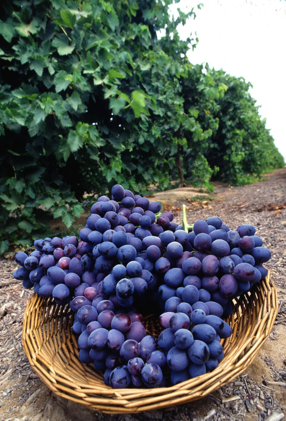 Free A Basket Of Seedless Grapes