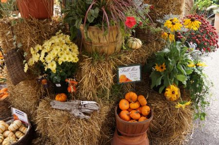 Free Pumpkin Display Autumn Antique