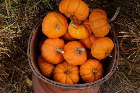 Free Pumpkins in basket