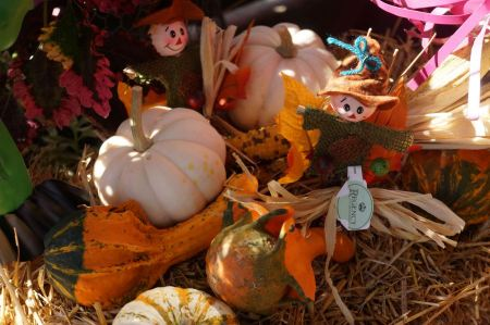 Free Autumn harvest of pumpkins halloween