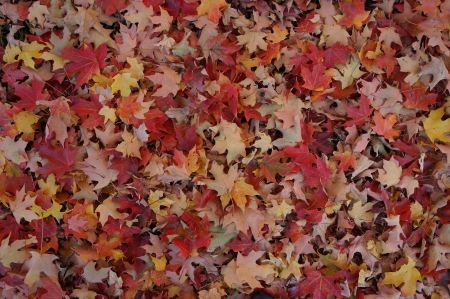Free Colorful and bright background made of fallen autumn leaves