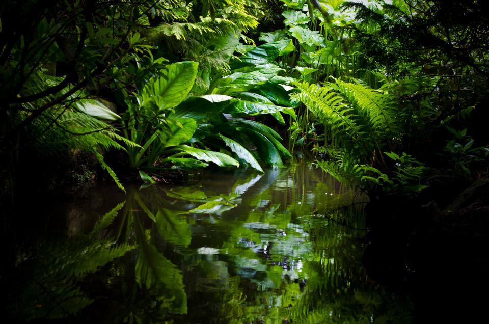 Free Tropical Garden