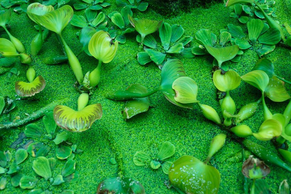 Free Green water plants Wallpaper