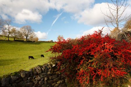 Free Autumn landscape on british countryside